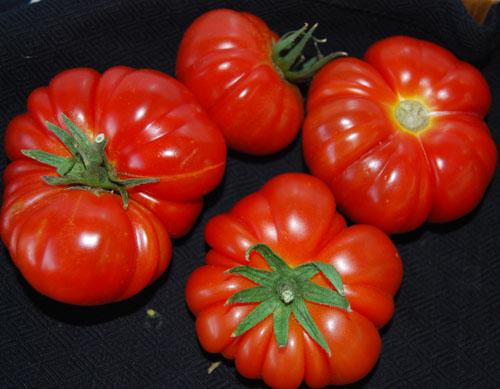 Costuluto Genevese tomato