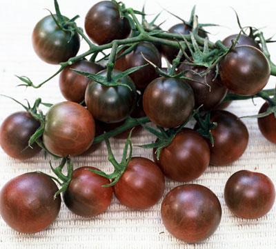 my favorite tomatoes to grow giantveggiegardener. Black Bedroom Furniture Sets. Home Design Ideas