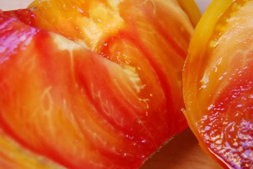 Growing Virginia Sweet Tomatoes  Giantveggiegardener-3122