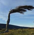 windy atree