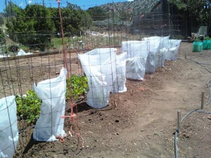 Create a physical barrier with row cover