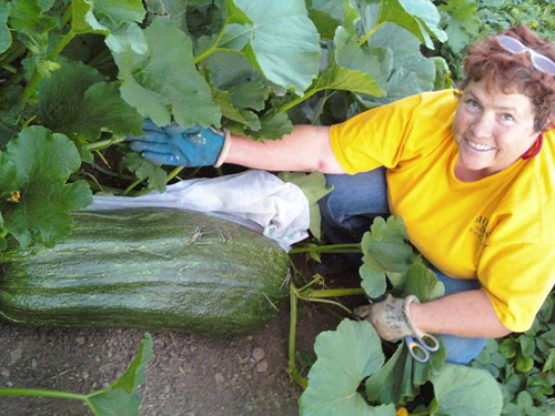 giant marrow 08-10