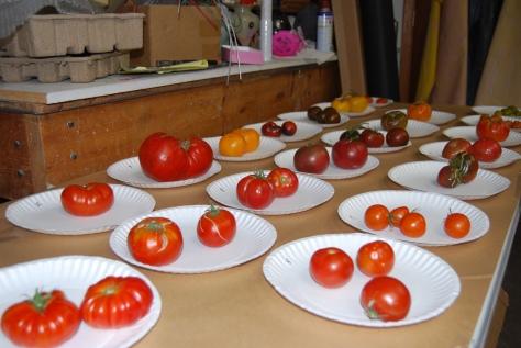 tomato contest1