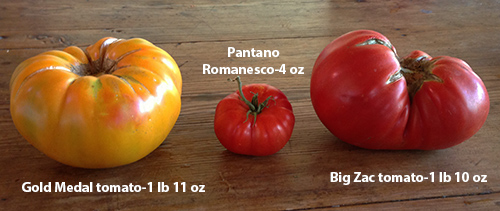 tomatoes_biggest_2013