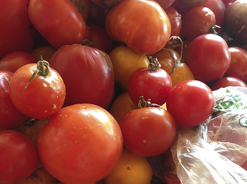 1tomato sauce-tomatoes ready