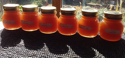 2013-part of the fall honey harvest