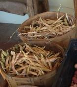 tarabais beans dried