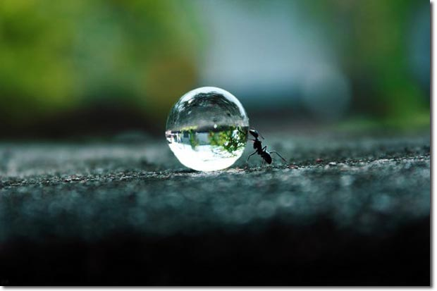 hard_work_ant_droplet