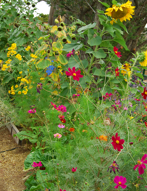FLOWERS IN GARDEN 2012