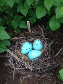 dragon eggs and nest in bean teepee
