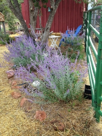 first bee garden