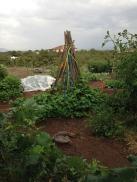 garden shot