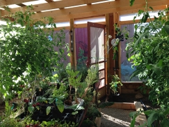 inside greenhouse looking out