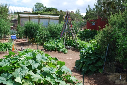 long shot of garden