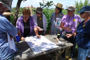 looking at garden plan