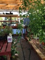 looking inside greenhouse
