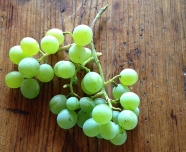 Himrod_grape cluster