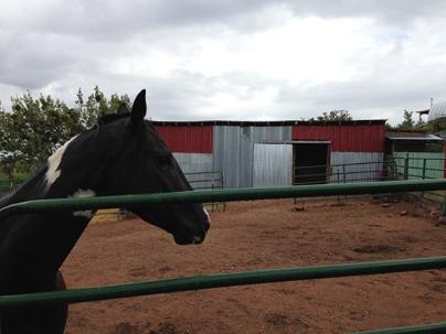 red barn and KOKO