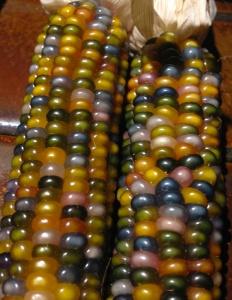 Glass Gem corn 10