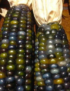 Glass Gem corn 11