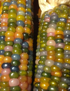 Glass Gem corn 14