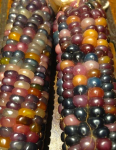 Glass Gem corn 15