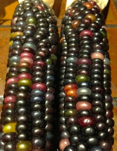 Glass Gem corn 4 (more colors than Glass Gem corn 9)