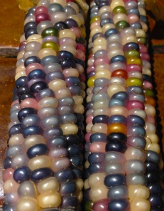 Glass Gem corn 6
