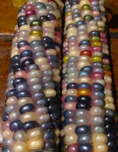 Glass Gem corn 6