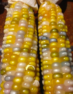 Glass Gem corn 7