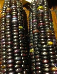 Glass Gem corn 9 (less colors than Glass Gem 4)