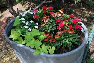flowers in trough