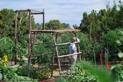 garden in July2