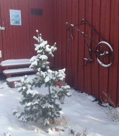 garden shed in Dec