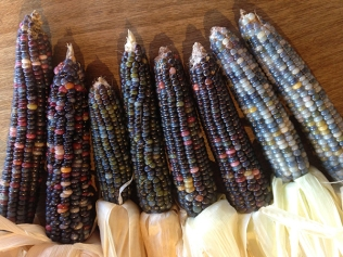 native american corn