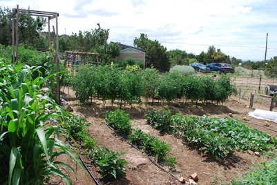 Tomato Lady's mini-farm