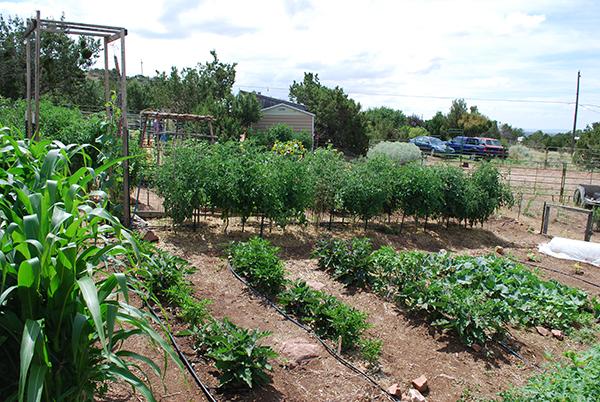 Tomato Lady's mini-farm