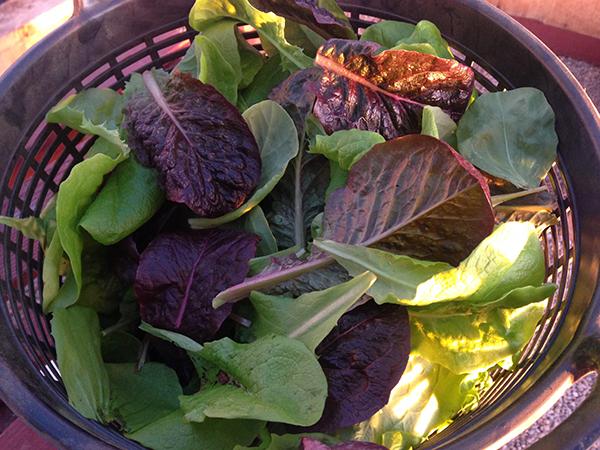 lettuce-jan 16, 2015
