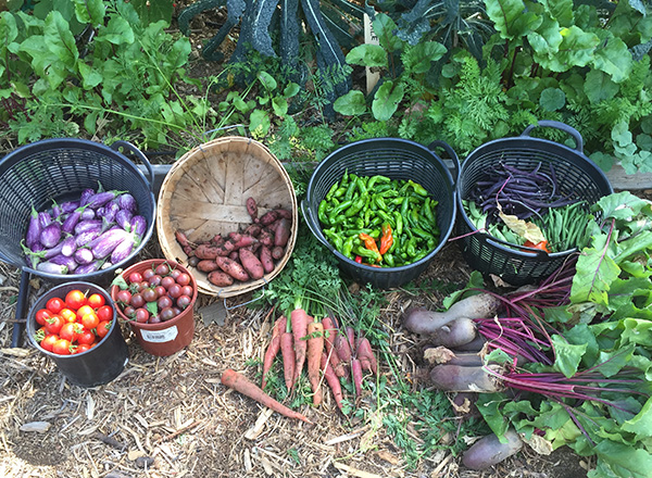 oct 8 harvest