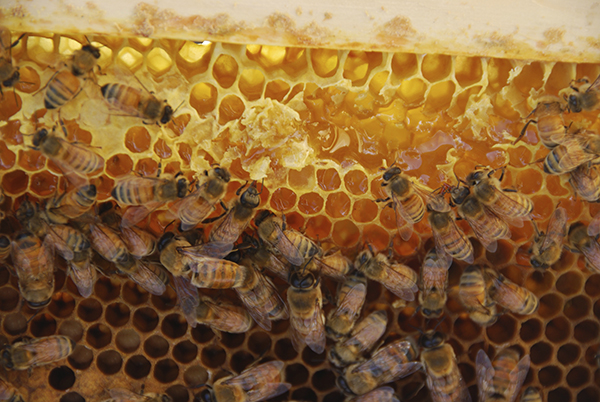 bees on bar