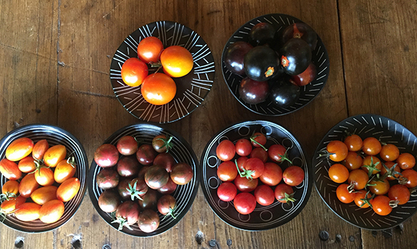 cherry tomatoes group