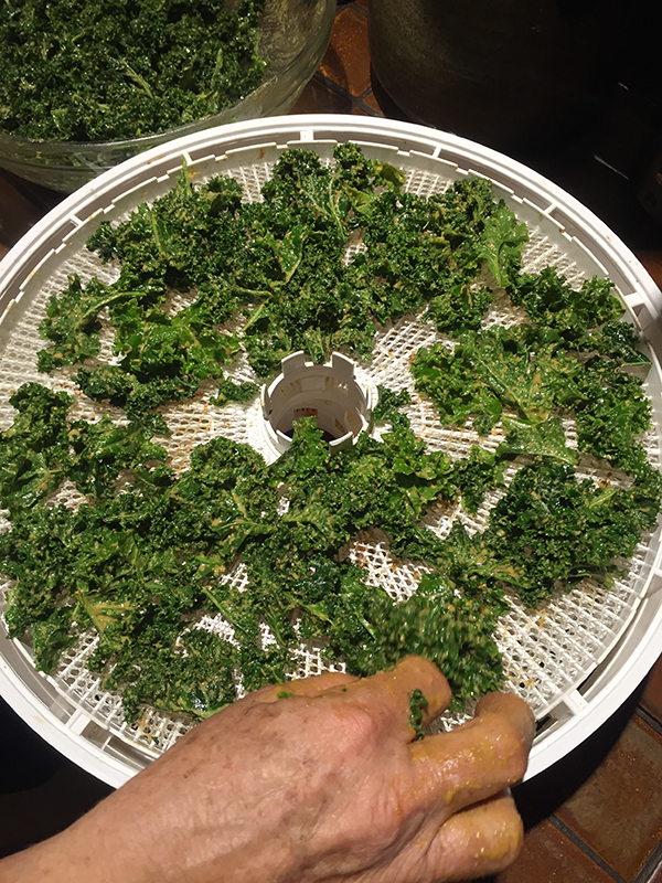 kale_putting on trays
