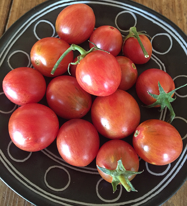 tomato_artisan pink bumblebee