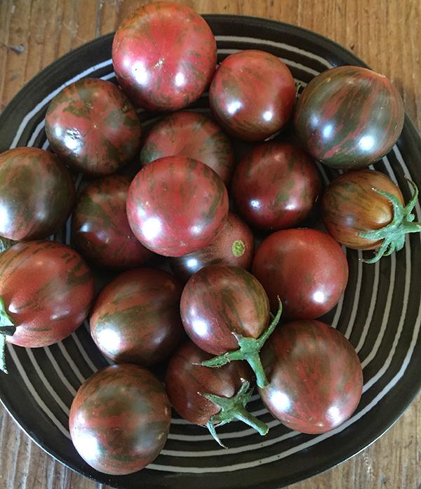 tomato_artisan purple bumblebee