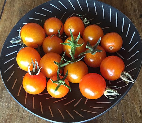 tomato_sungold