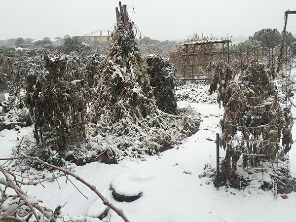 winter storm_ Nov 2015a