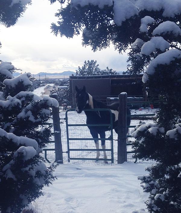 Koko Snow Dec_BLOG