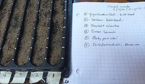 seed starting tray with journal entry.jpg