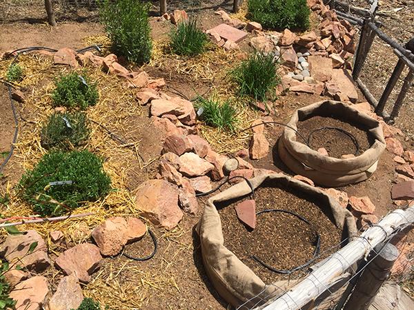potato bags in herb garden