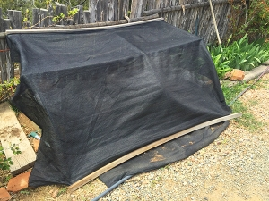 spinach bed with shade cloth